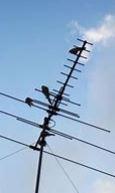 Digital tv antennas Adelaide from AntennaInstallations