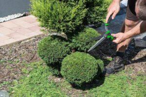 gardening-adelaide